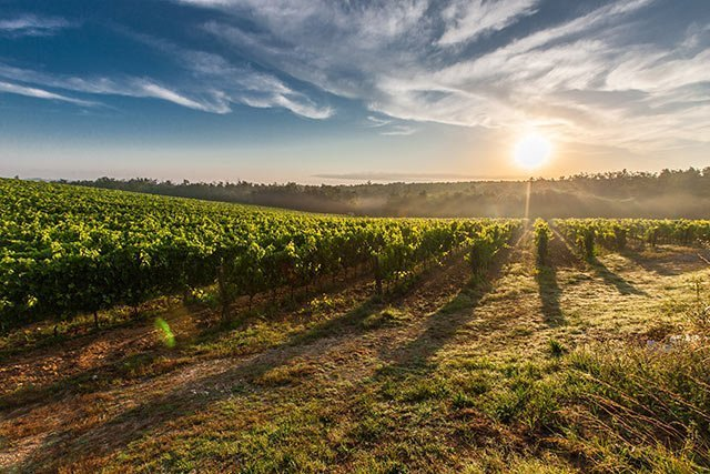 Limo for Winery Tours NC